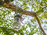 Destination Wedding in Croatia - Flammeum - Nature Harmony - Garden ornament